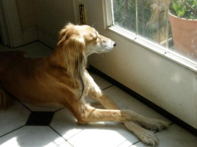 dog 084_convert_20080322203359