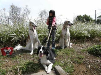 dog 108_convert_20080323111732
