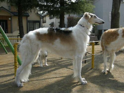 dog 218_convert_20080330205908