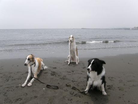 dog 098_convert_20080702212317