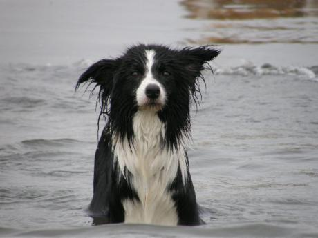 dog 173_convert_20080707101039