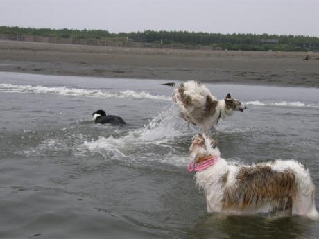 dog 195_convert_20080707101208