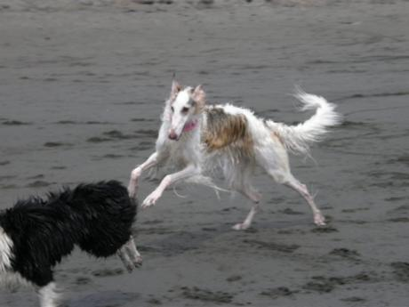 dog 227_convert_20080707101503