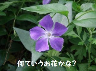 なんていう花