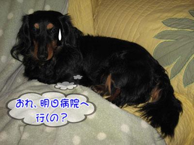 IMG_2594a.jpg