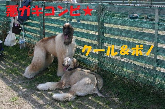 振袖&サイトハウンドオフ会08.4.6 2000