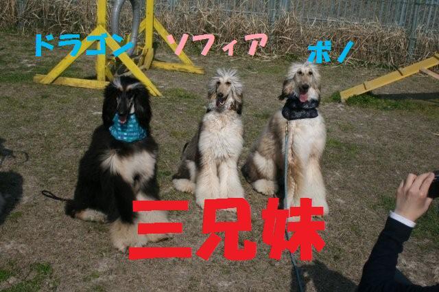 振袖&サイトハウンドオフ会08.4.6 2160