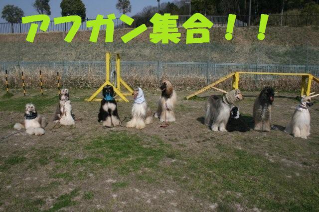 振袖&サイトハウンドオフ会08.4.6 2450