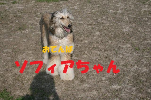 振袖&サイトハウンドオフ会08.4.6 3070
