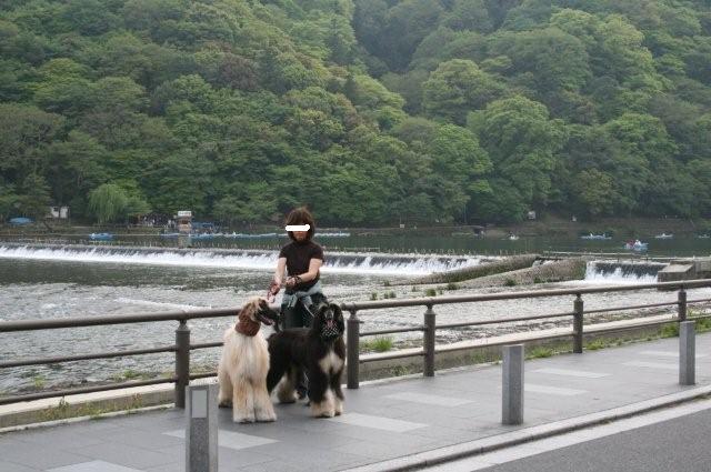 嵐山.渡月橋20.4.27 013