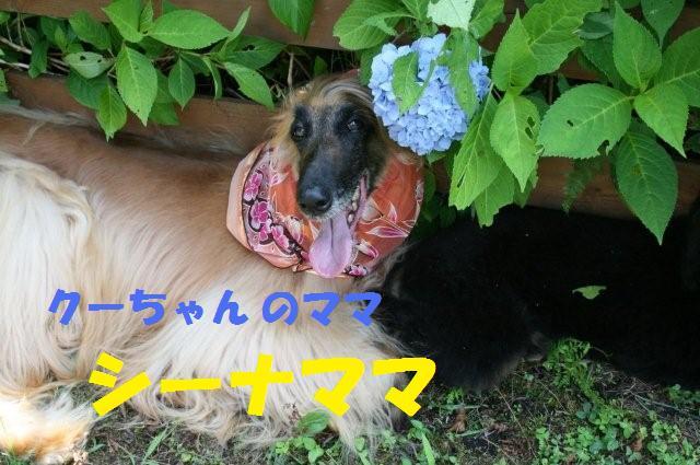 クールオフ会IN長野20.7.20.21 054