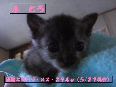 toro001.jpg