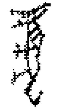 虎の象形文字 00088 c