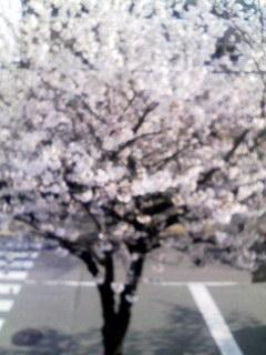 桜-自宅窓080402_0739~001