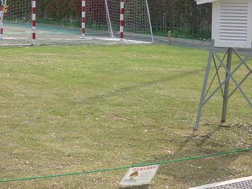 三中の芝生 004