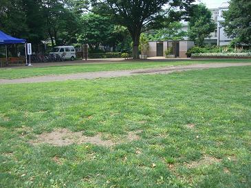 080524 市民公園芝生04