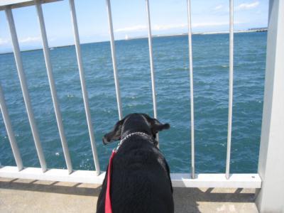 海だぁ~♪