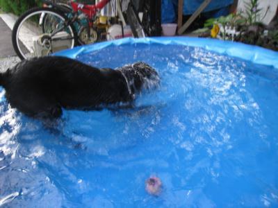 飛び込み潜水