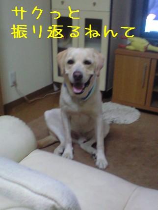 CA391042.jpg