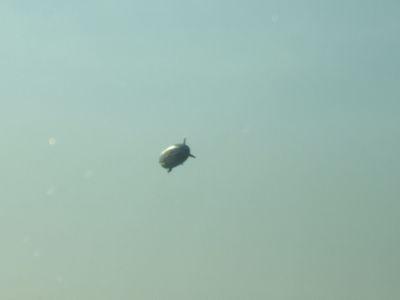 8.04.20熱気球