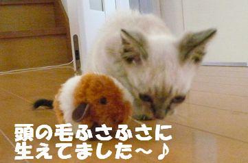猫とねず1