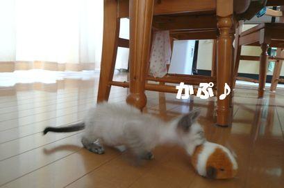 猫とねず2