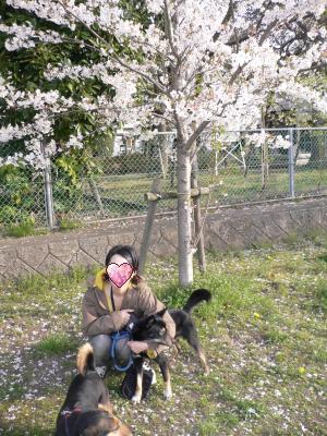 くるみと桜