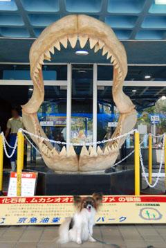 サメの歯と