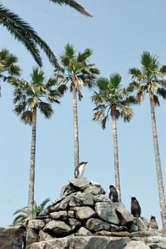 ペンギン島