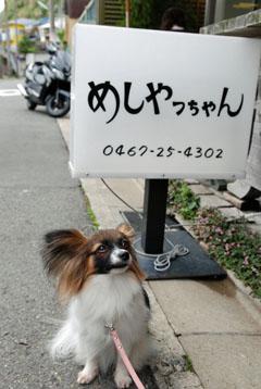 看板犬候補