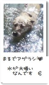 アザラシゆう030819_0941~01