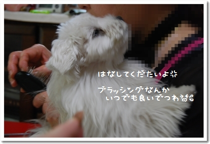 DSC_0484_20080518094222.jpg