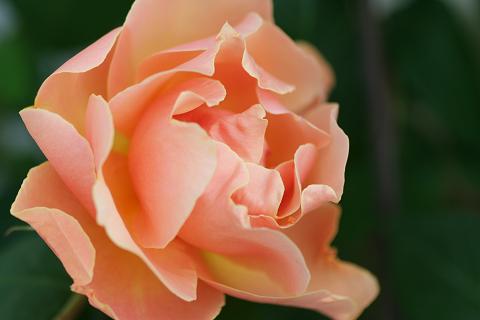 2008オレンジ (1)0009