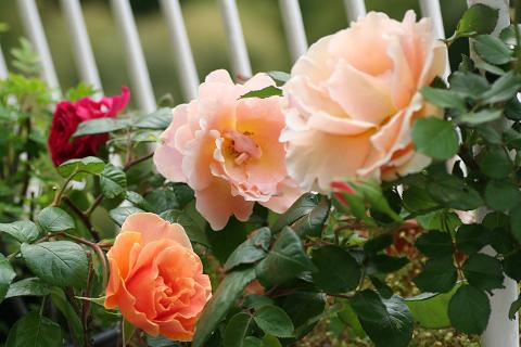 2008オレンジ (2)0008