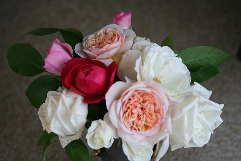 ブリままの薔薇 (1)0002