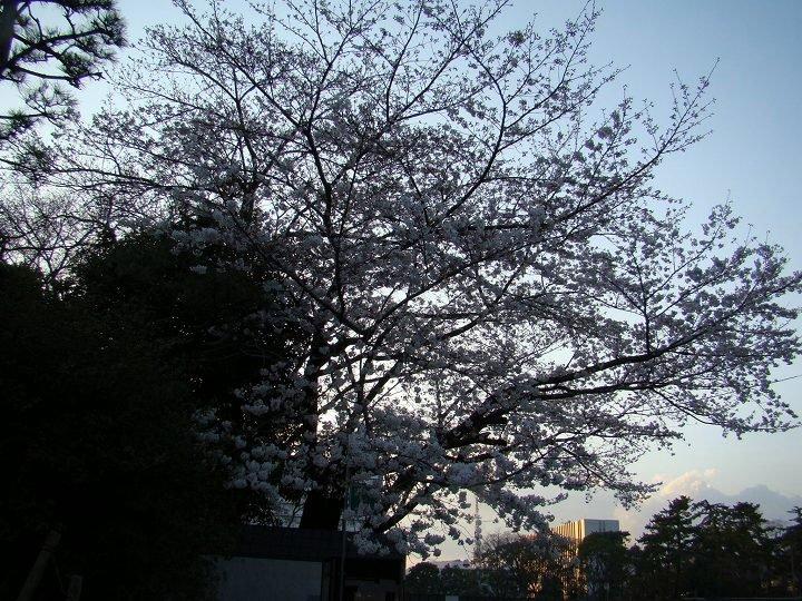 20080326-1.jpg