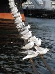 Seaguls.jpg