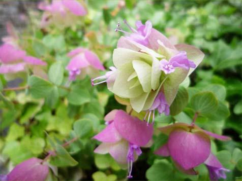 花の花飾り
