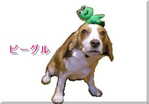 <a href='http://dog.blogmura.com/beagle/'><img src='http://blog-imgs-21.fc2.com/l/e/m/lemonbeagle/kaerulemon.jpg' alt='kaerulemon.jpg' border='0' /></a><br clear='all' />