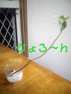 080529_185223_M.jpg