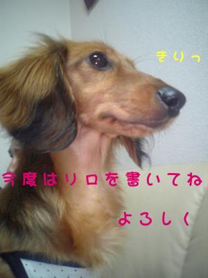 DVC000342.jpg