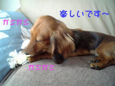 DVC000372.jpg