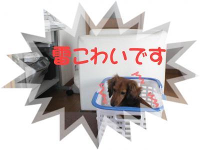 PIC_0807.jpg