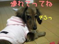 PIC_0815_convert_20080312103611.jpg