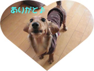 PIC_1023.jpg