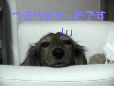 PIC_1036.jpg