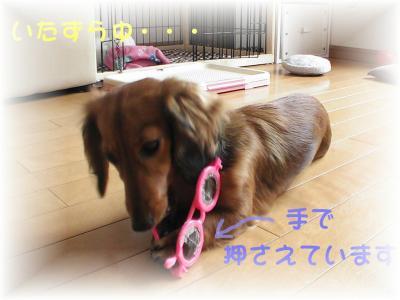 PIC_10772.jpg