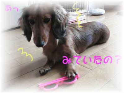 PIC_10792.jpg