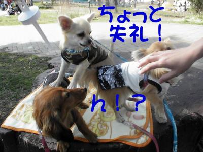 PIC_1175_20080324093000.jpg