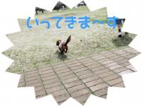 PIC_1358.jpg